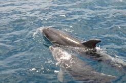 delfin-3