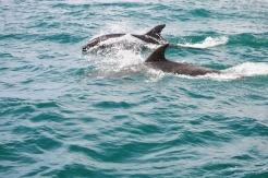 delfine-1