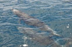 delfine-4