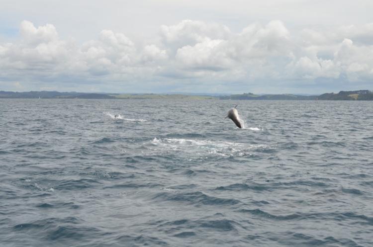 delfine-6